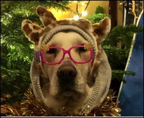 Virtual Christmas Photo